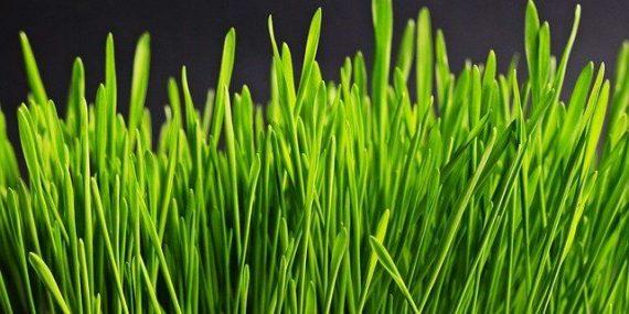 gnojenje-trave